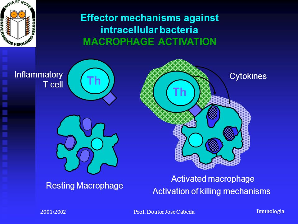 Th Th Effector mechanisms against intracellular bacteria