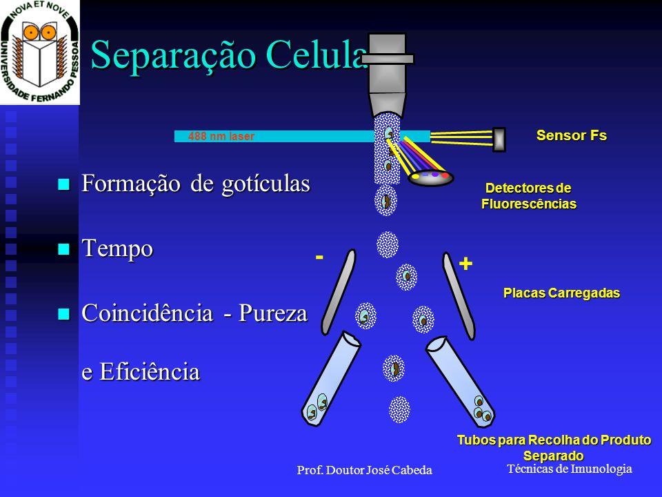 Detectores de Fluorescências Tubos para Recolha do Produto Separado