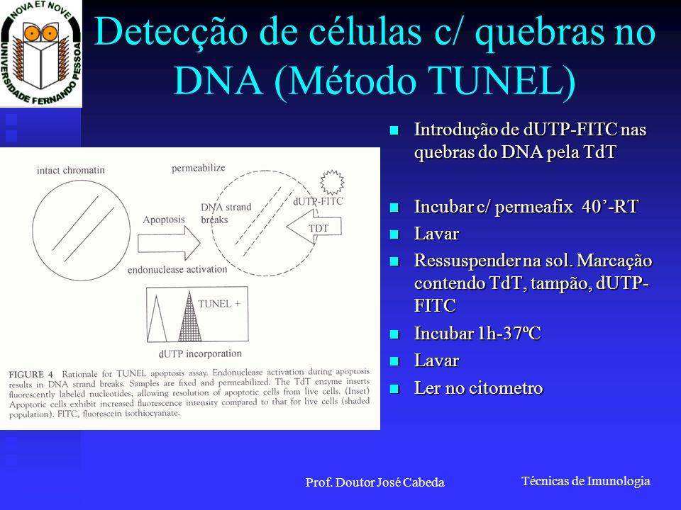 Detecção de células c/ quebras no DNA (Método TUNEL)
