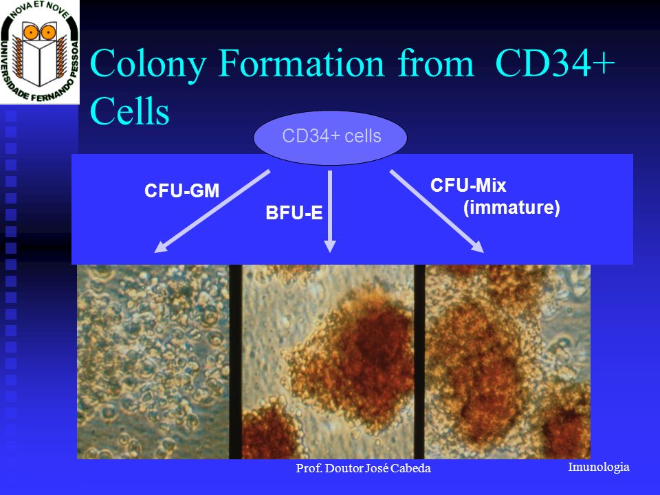Colony Formation from CD34+ Cells