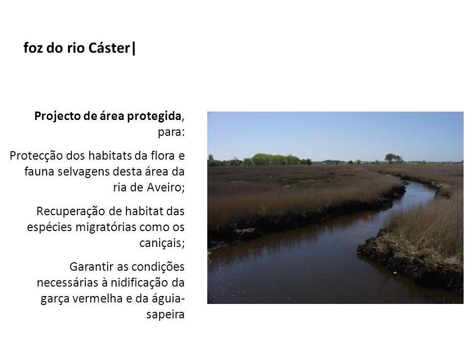 foz do rio Cáster|