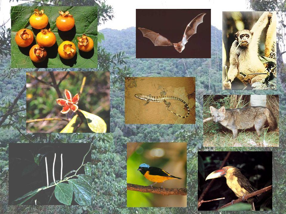 Relacionados a forma como diferentes espécies interagem em uma localidade.