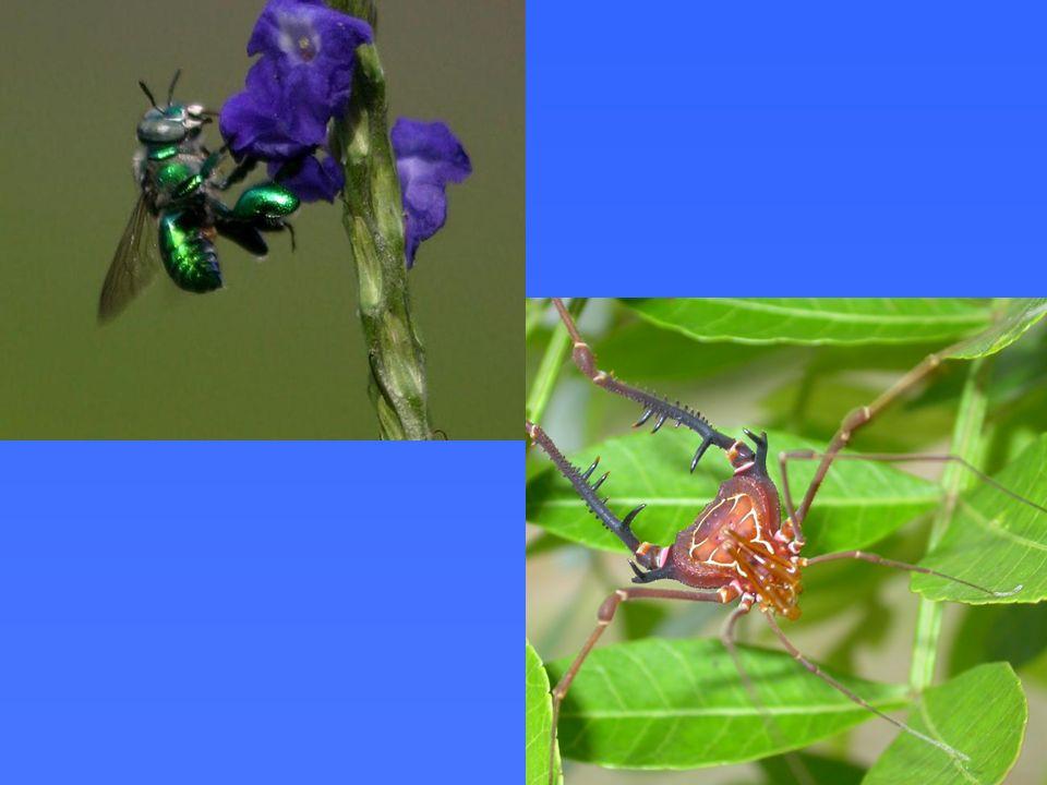 Em redes antagonísticas, muitas vezes é muito difícil amostrar uma espécie e , em muitos casos