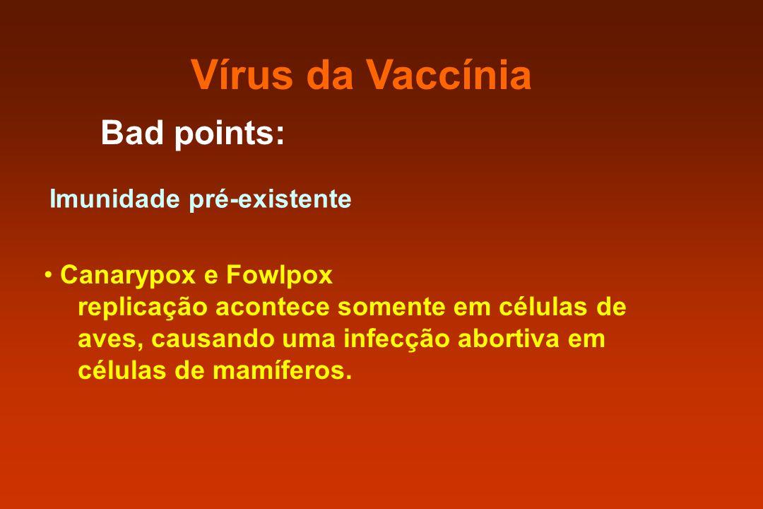 Vírus da Vaccínia Bad points: Imunidade pré-existente