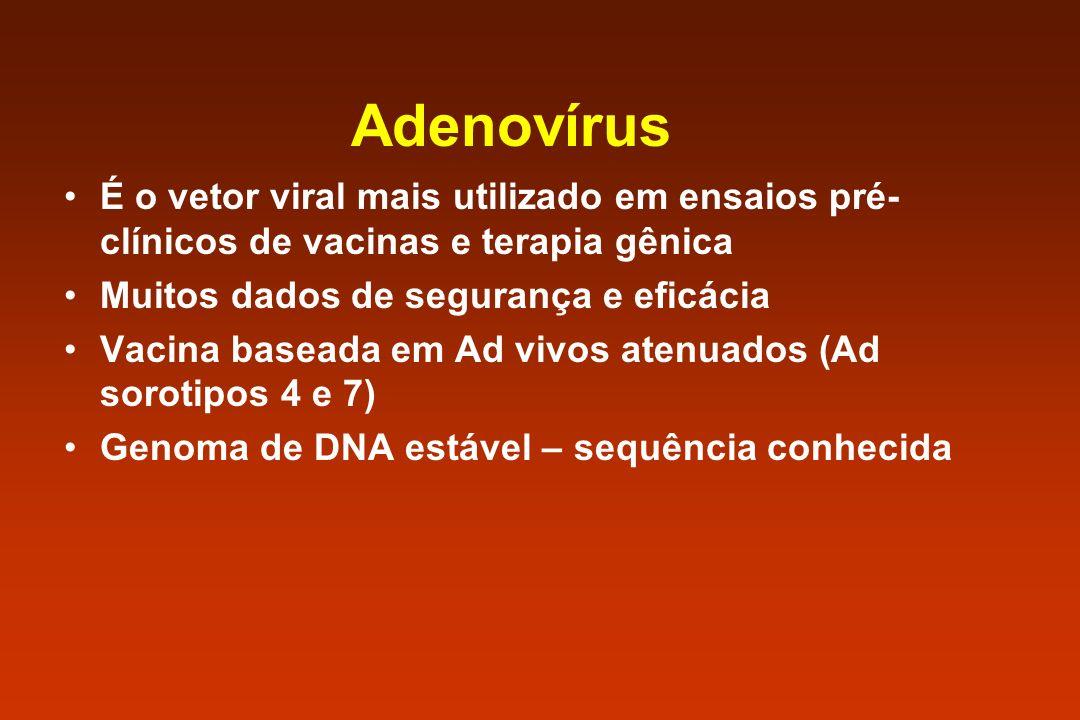 Adenovírus É o vetor viral mais utilizado em ensaios pré-clínicos de vacinas e terapia gênica. Muitos dados de segurança e eficácia.