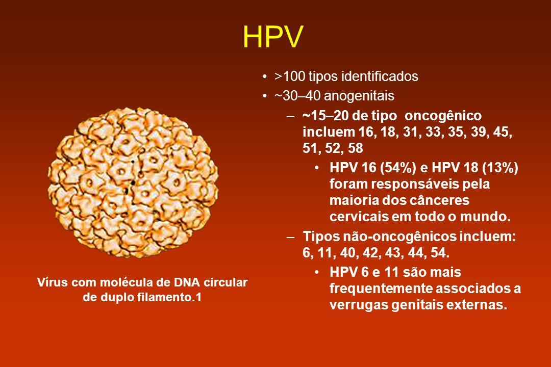 Vírus com molécula de DNA circular de duplo filamento.1