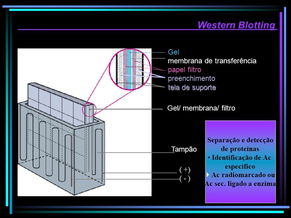 Western Blotting Gel membrana de transferência papel filtro