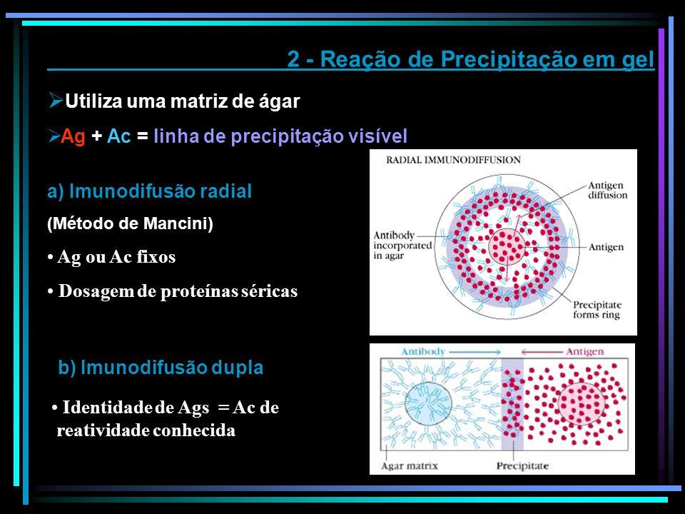 2 - Reação de Precipitação em gel Utiliza uma matriz de ágar