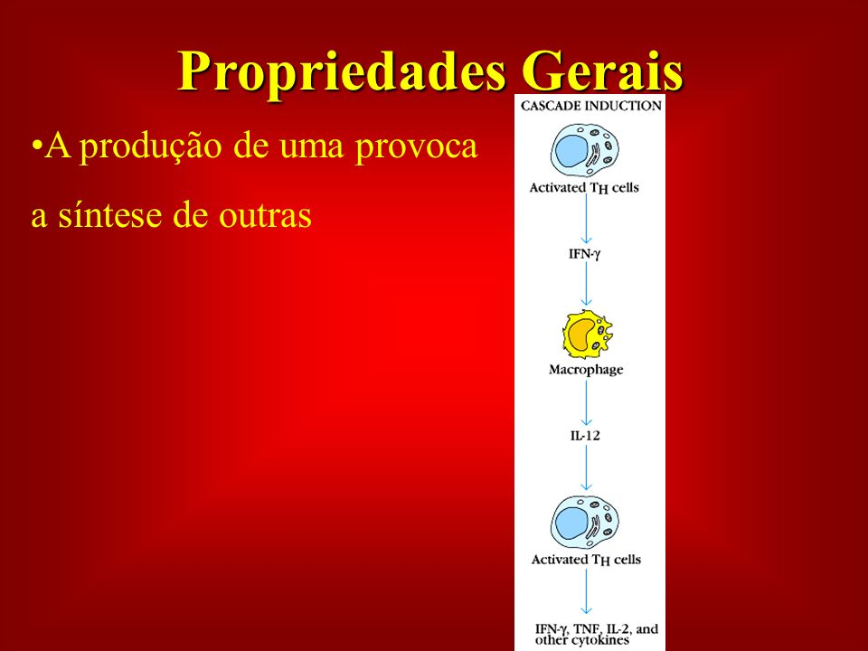 Propriedades Gerais A produção de uma provoca a síntese de outras