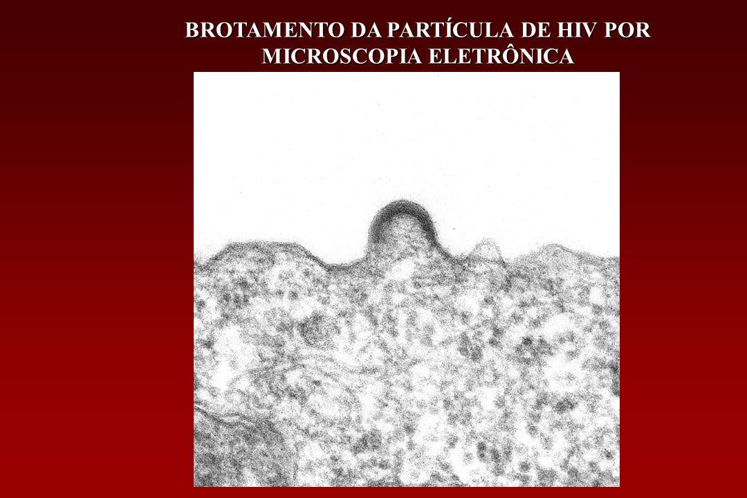 BROTAMENTO DA PARTÍCULA DE HIV POR MICROSCOPIA ELETRÔNICA