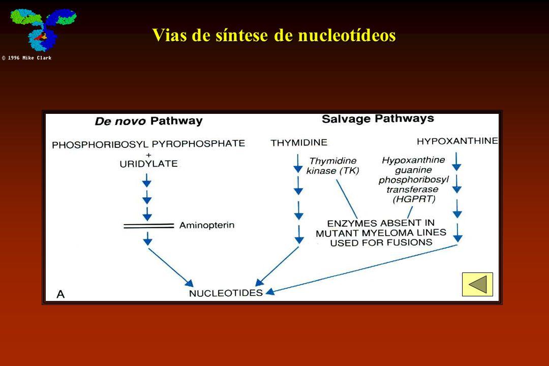 Vias de síntese de nucleotídeos