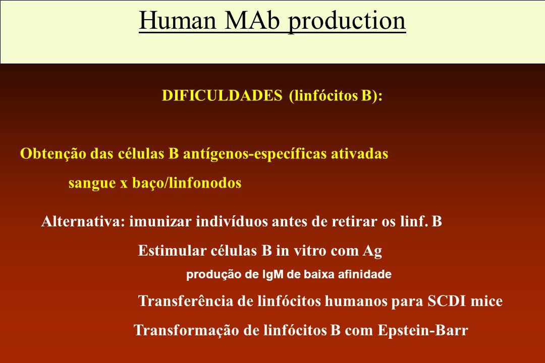 Anticorpos monoclonais humanos DIFICULDADES (linfócitos B):