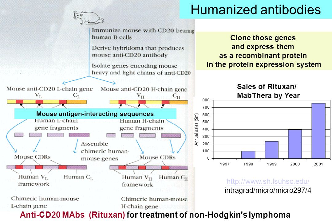 Humanized antibodies Clone those genes. and express them. as a recombinant protein. in the protein expression system.