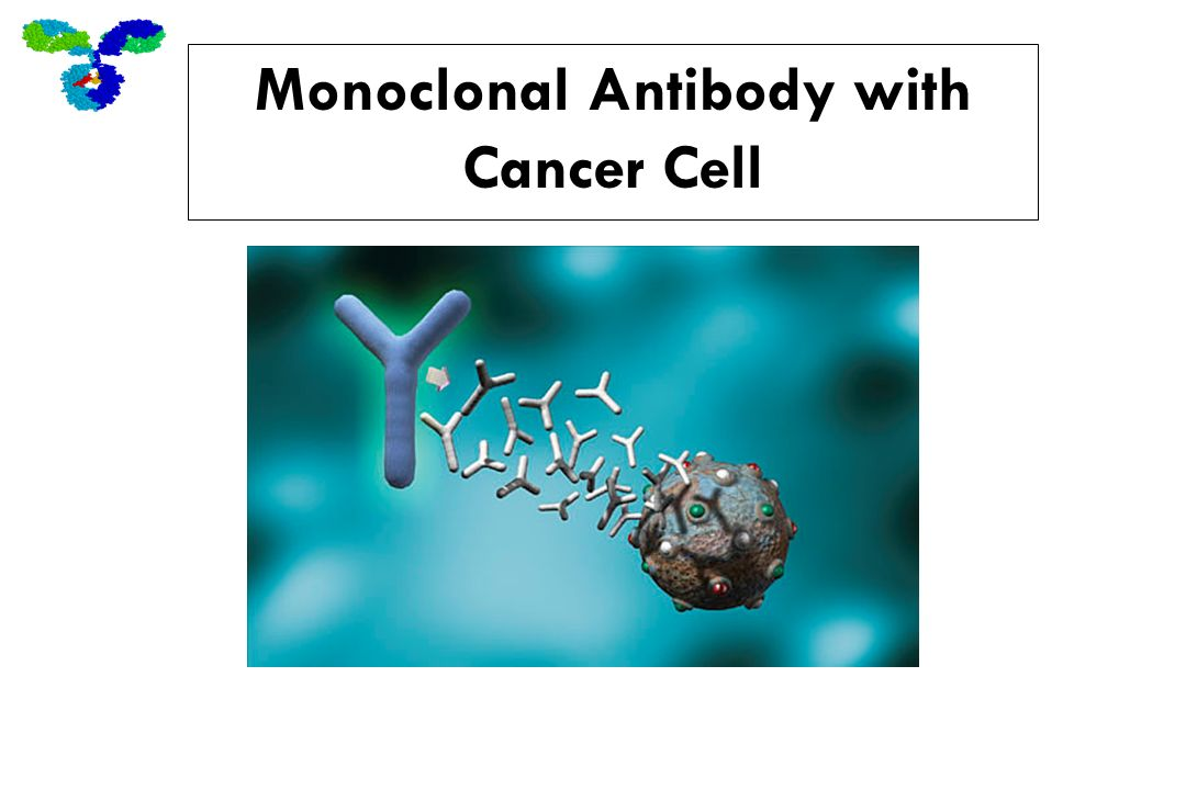 Monoclonal Antibody with Cancer Cell