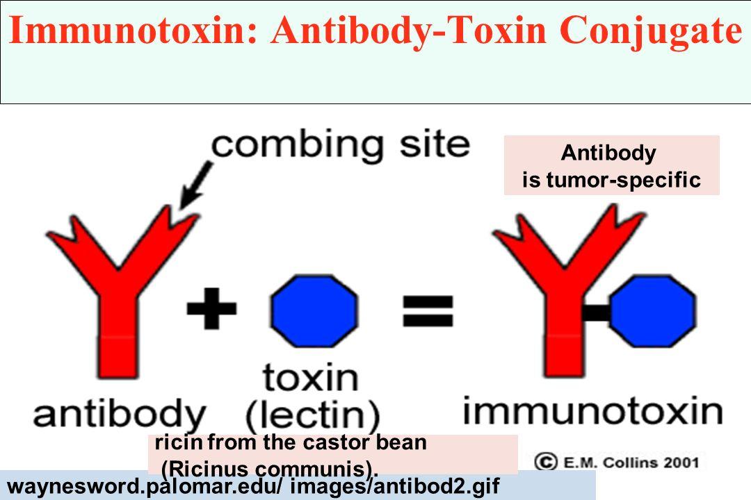 Immunotoxin: Antibody-Toxin Conjugate