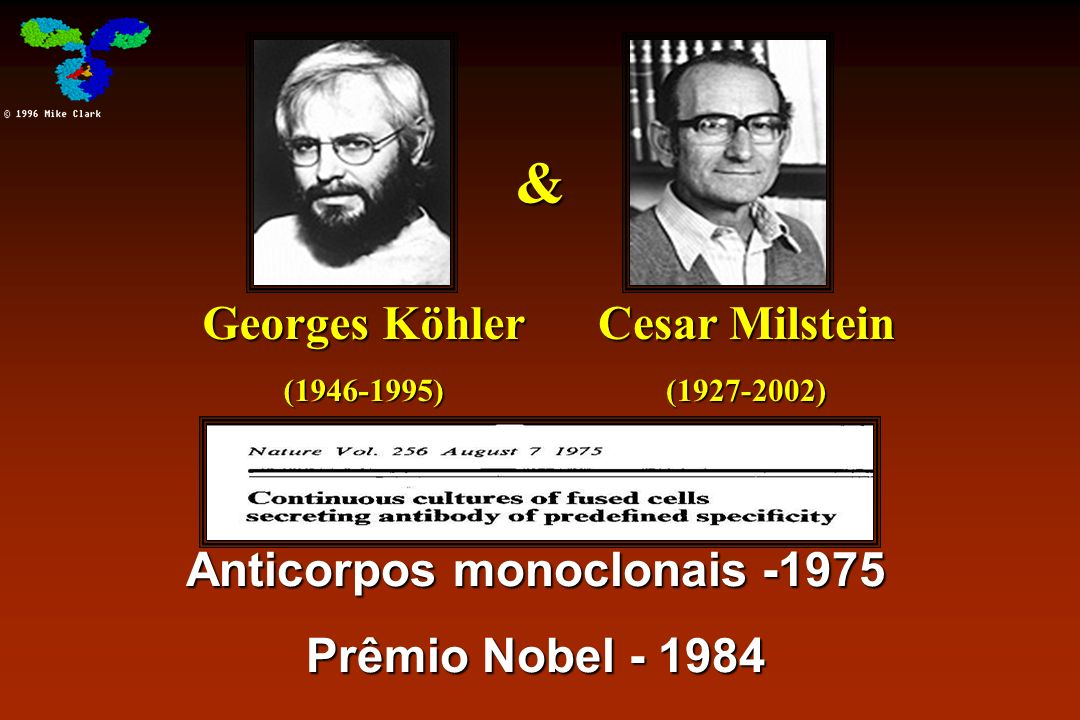 Anticorpos monoclonais -1975