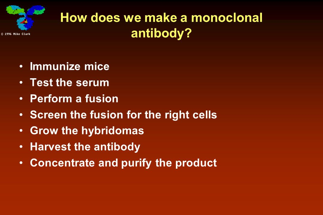 How does we make a monoclonal antibody
