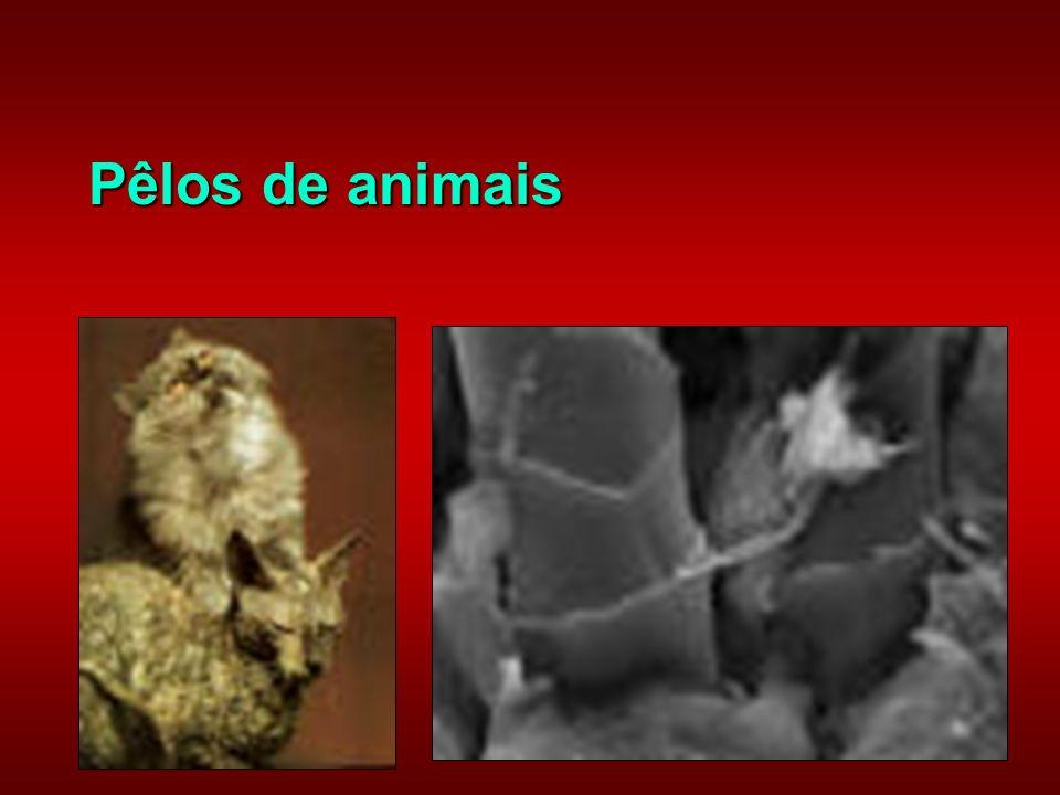 Pêlos de animais