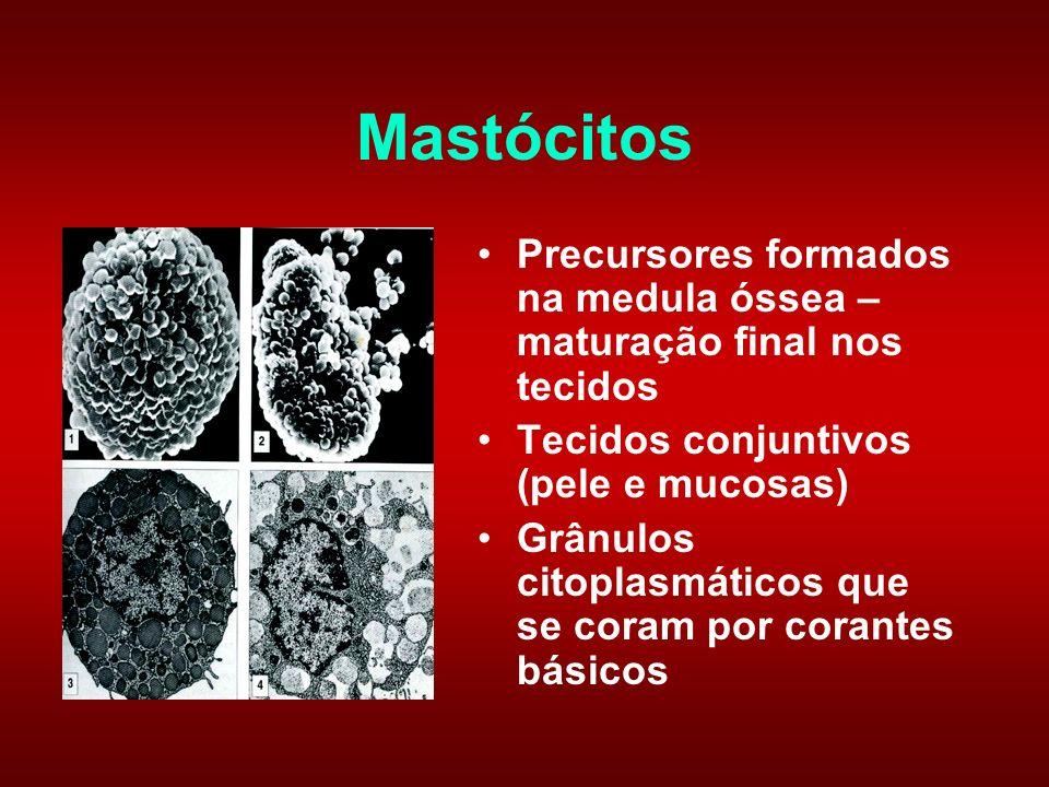 Mastócitos Precursores formados na medula óssea – maturação final nos tecidos. Tecidos conjuntivos (pele e mucosas)