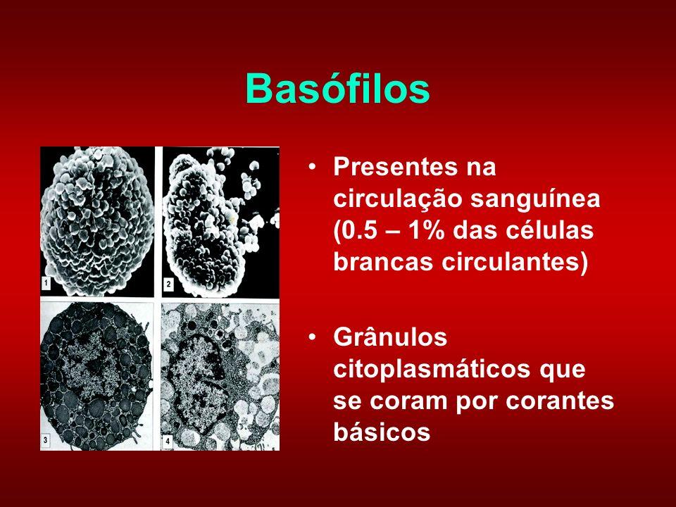Basófilos Presentes na circulação sanguínea (0.5 – 1% das células brancas circulantes) Grânulos citoplasmáticos que se coram por corantes básicos.