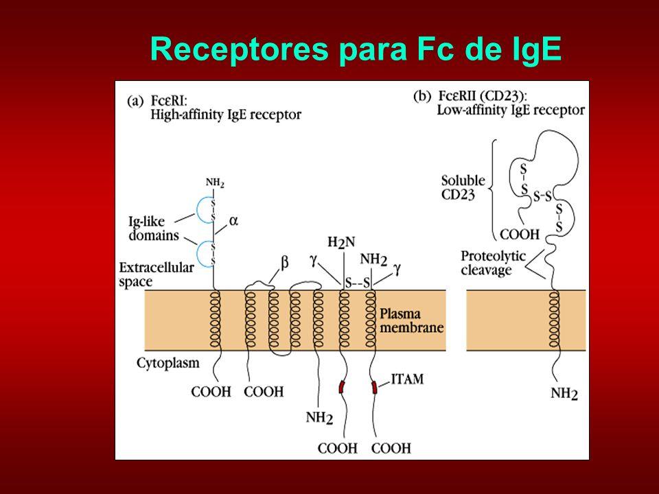 Receptores para Fc de IgE