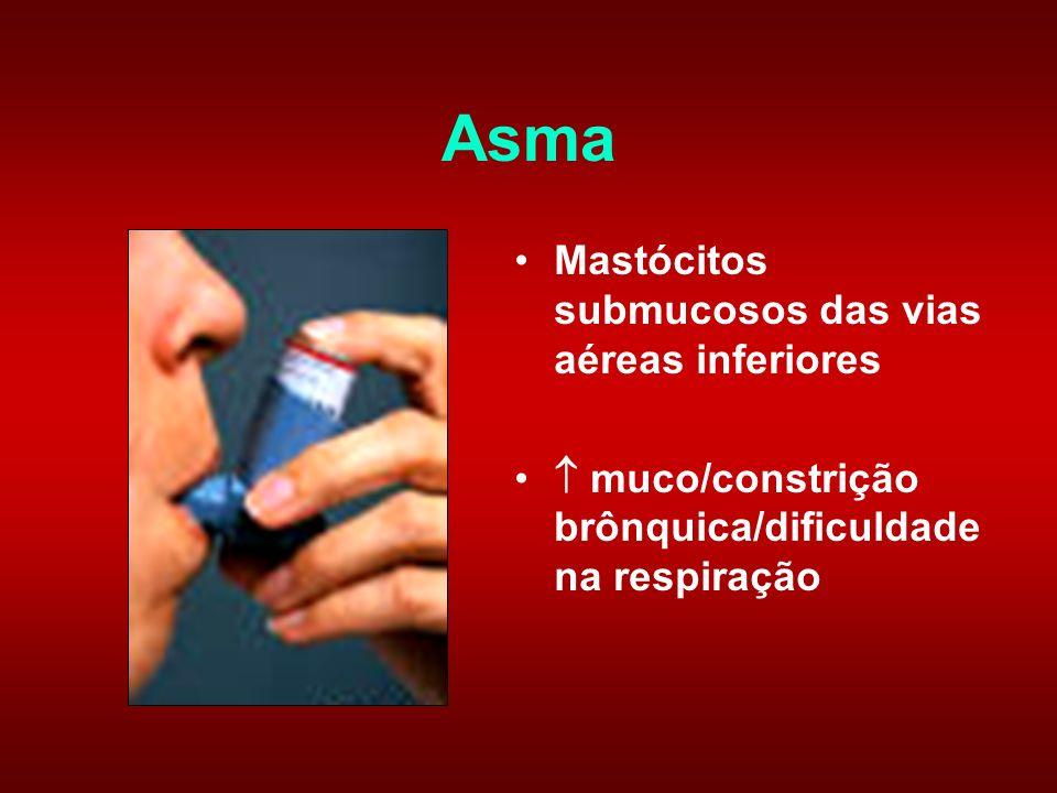 Asma Mastócitos submucosos das vias aéreas inferiores