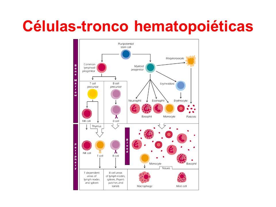 Células-tronco hematopoiéticas