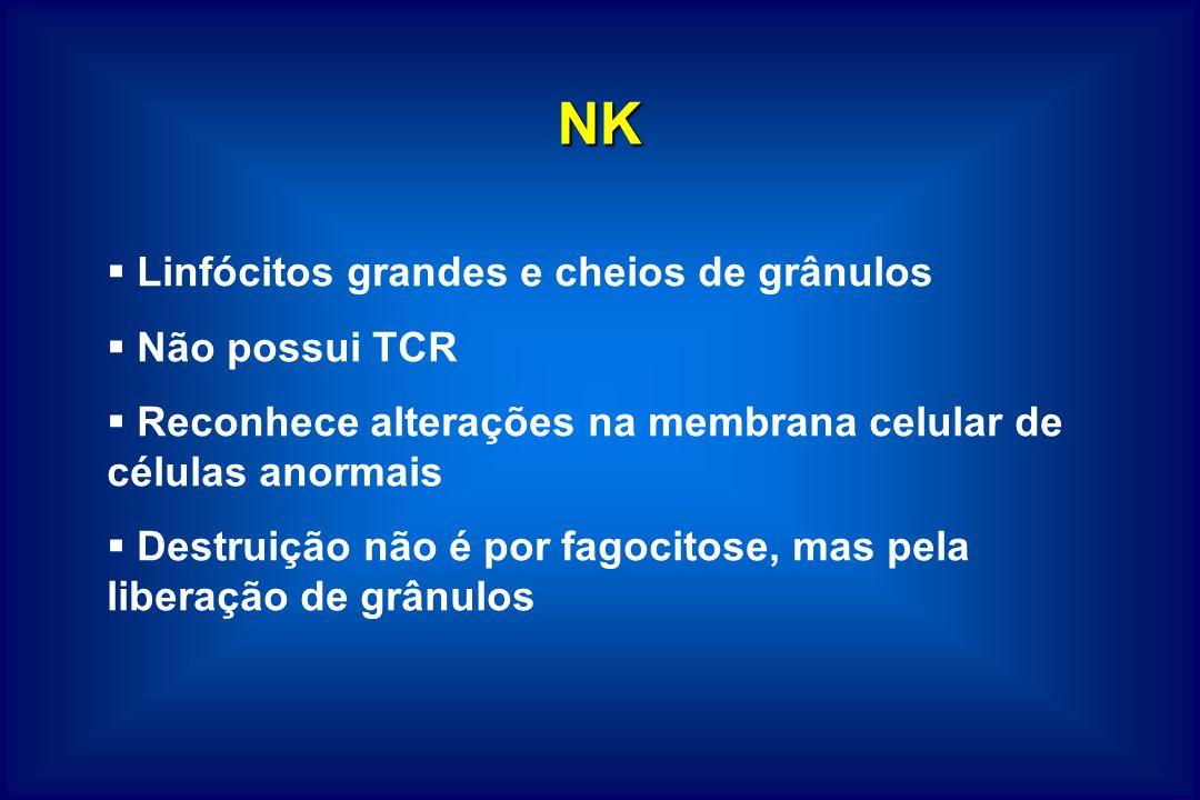 NK Linfócitos grandes e cheios de grânulos Não possui TCR