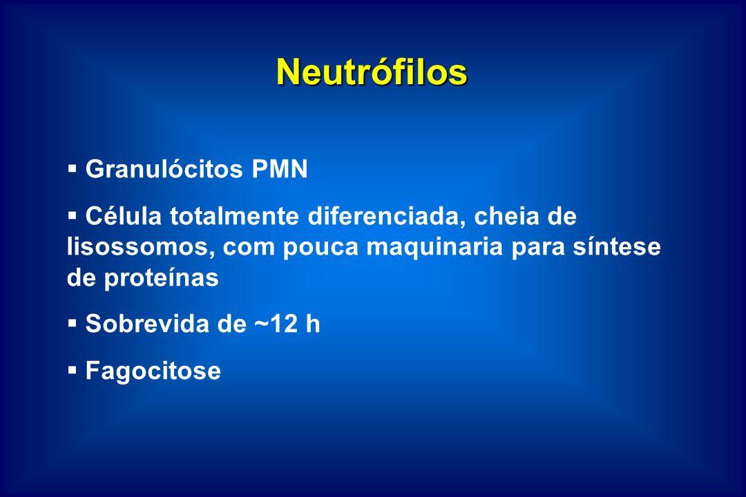 Neutrófilos Granulócitos PMN