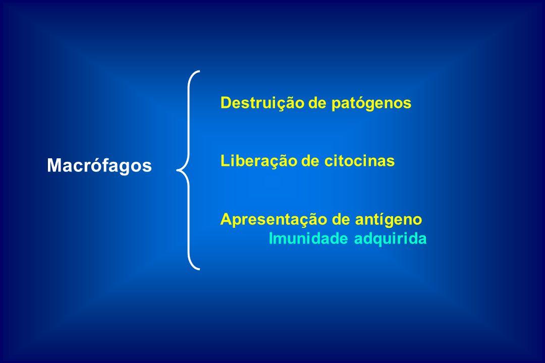 Macrófagos Destruição de patógenos Liberação de citocinas