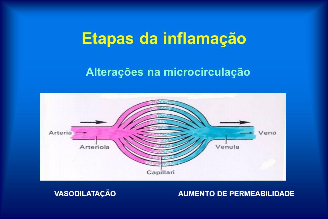 Etapas da inflamação Alterações na microcirculação VASODILATAÇÃO