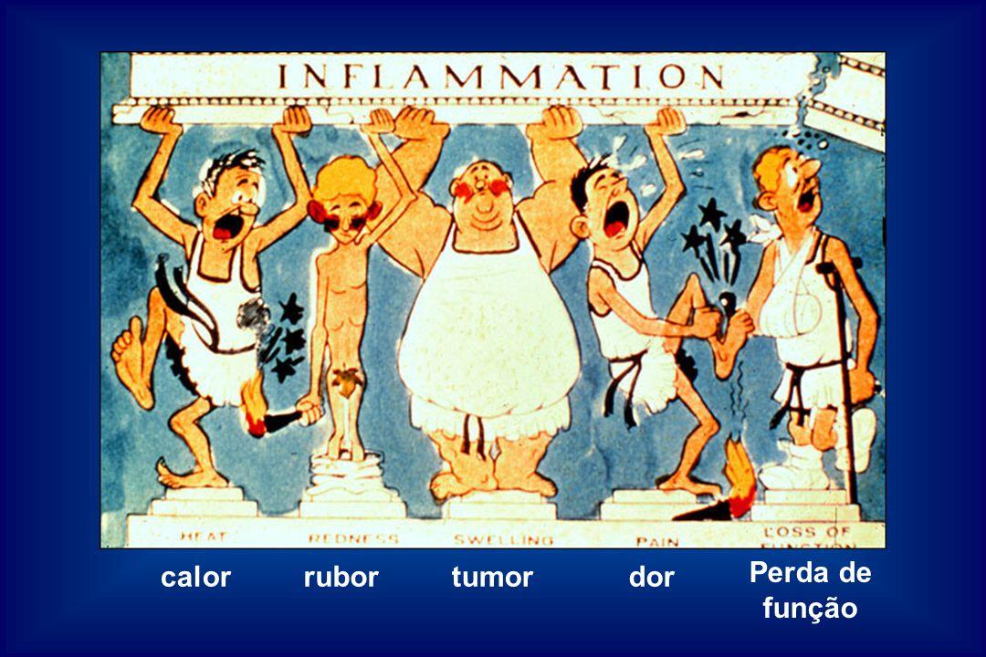 calor tumor dor Perda de função rubor