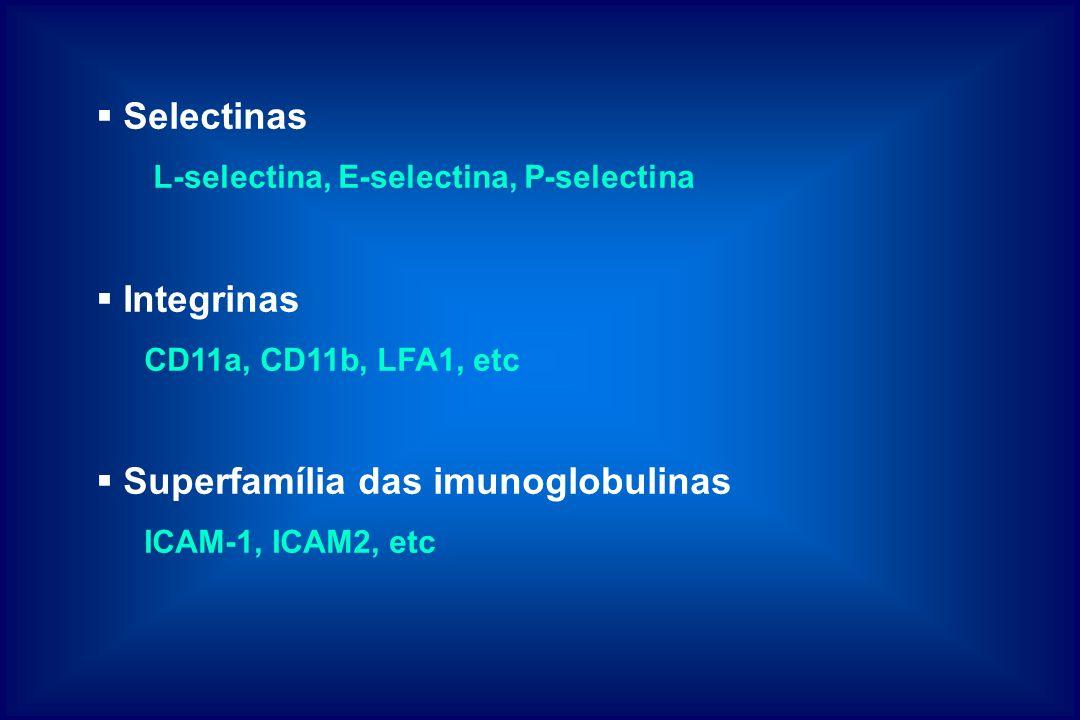 Superfamília das imunoglobulinas