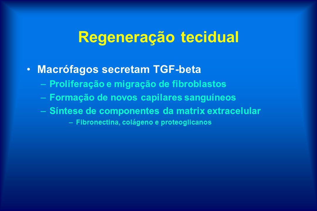 Regeneração tecidual Macrófagos secretam TGF-beta