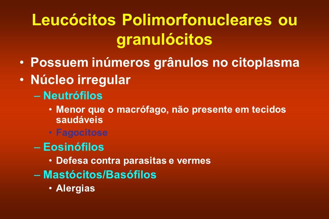 Leucócitos Polimorfonucleares ou granulócitos