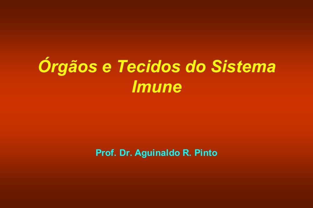 Órgãos e Tecidos do Sistema Imune