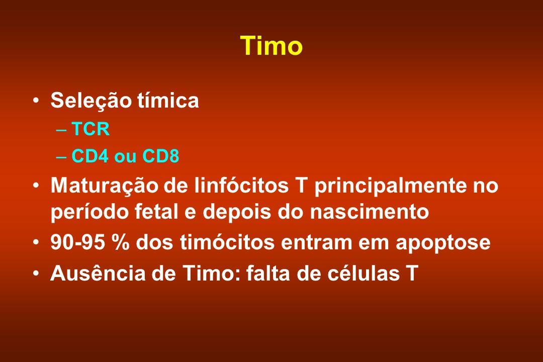 Timo Seleção tímica. TCR. CD4 ou CD8. Maturação de linfócitos T principalmente no período fetal e depois do nascimento.