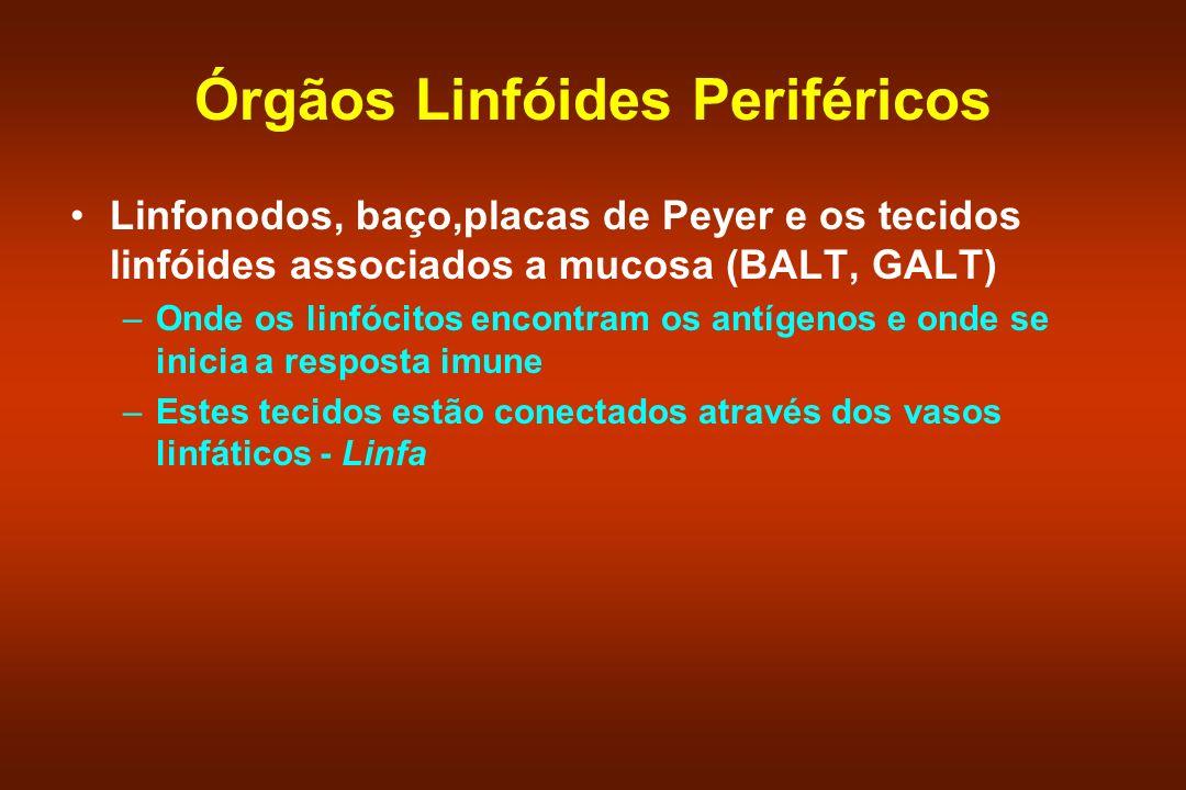 Órgãos Linfóides Periféricos