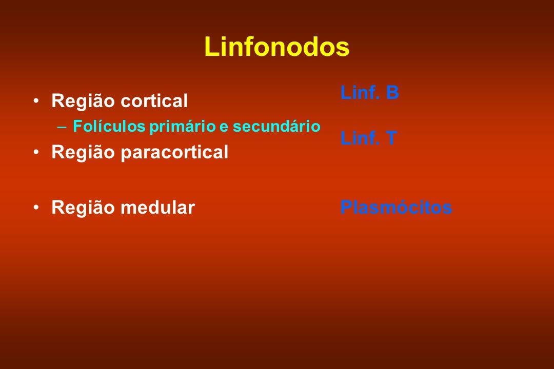 Linfonodos Região cortical Linf. B Linf. T Região paracortical