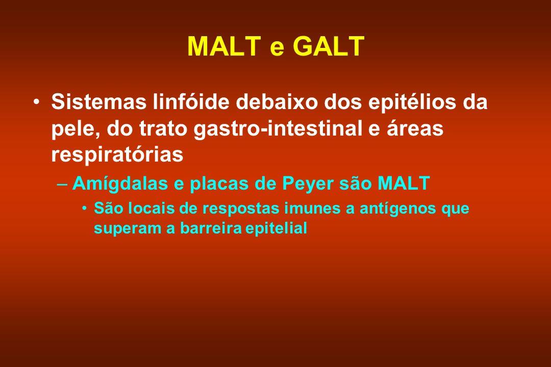 MALT e GALT Sistemas linfóide debaixo dos epitélios da pele, do trato gastro-intestinal e áreas respiratórias.