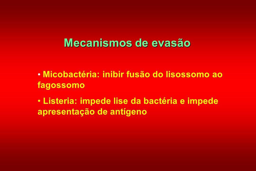 Mecanismos de evasão Micobactéria: inibir fusão do lisossomo ao fagossomo.
