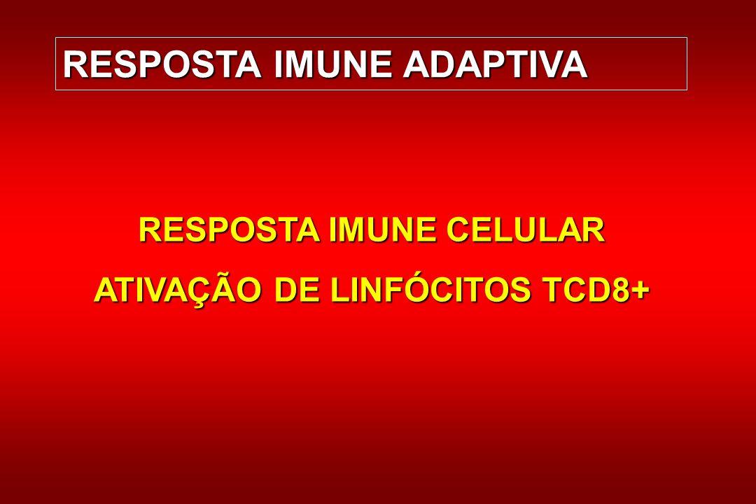 RESPOSTA IMUNE CELULAR ATIVAÇÃO DE LINFÓCITOS TCD8+
