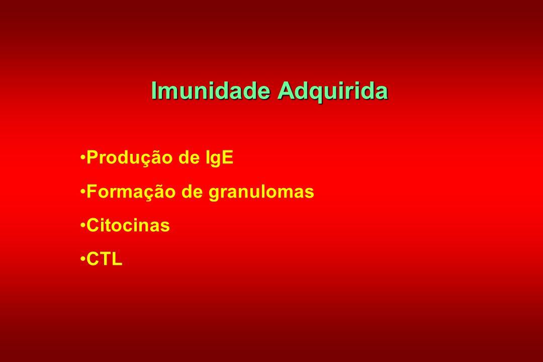 Imunidade Adquirida Produção de IgE Formação de granulomas Citocinas