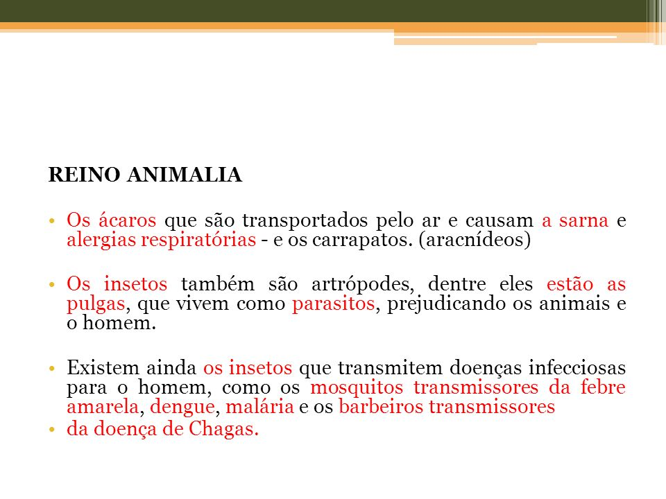 REINO ANIMALIA Os ácaros que são transportados pelo ar e causam a sarna e alergias respiratórias - e os carrapatos. (aracnídeos)