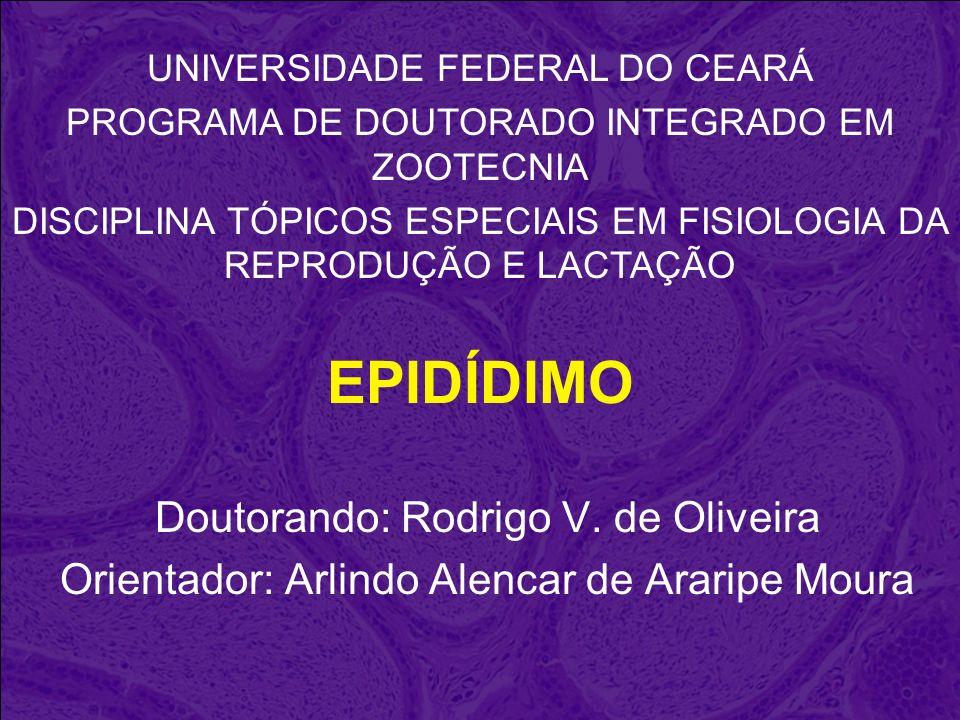 EPIDÍDIMO Doutorando: Rodrigo V. de Oliveira