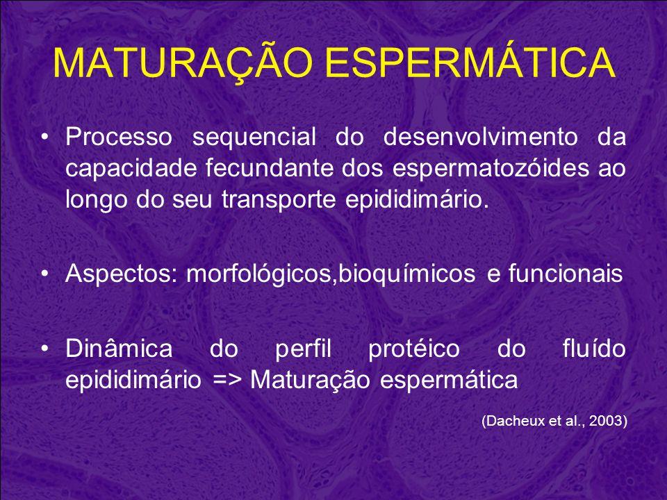 MATURAÇÃO ESPERMÁTICA