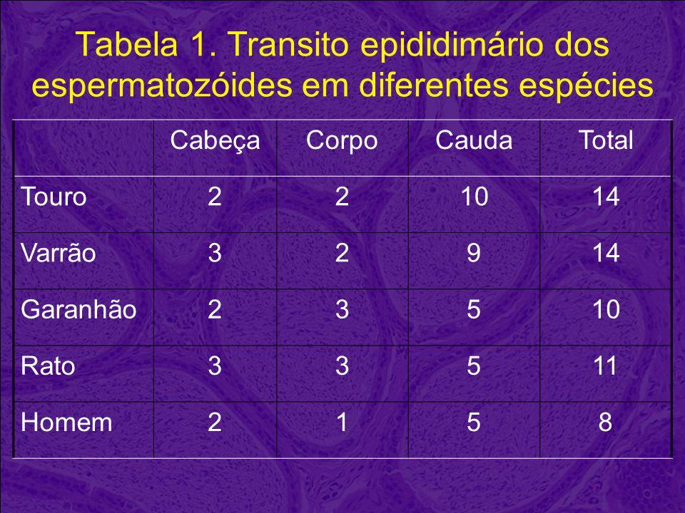 Tabela 1. Transito epididimário dos espermatozóides em diferentes espécies