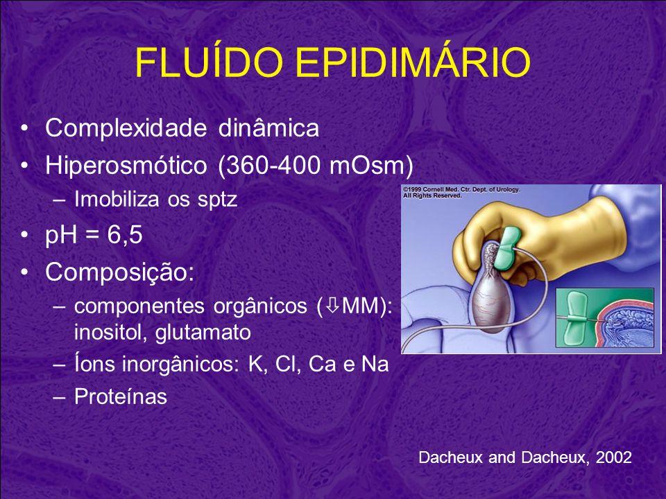 FLUÍDO EPIDIMÁRIO Complexidade dinâmica Hiperosmótico (360-400 mOsm)