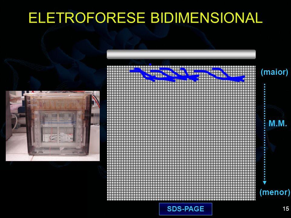 ELETROFORESE BIDIMENSIONAL