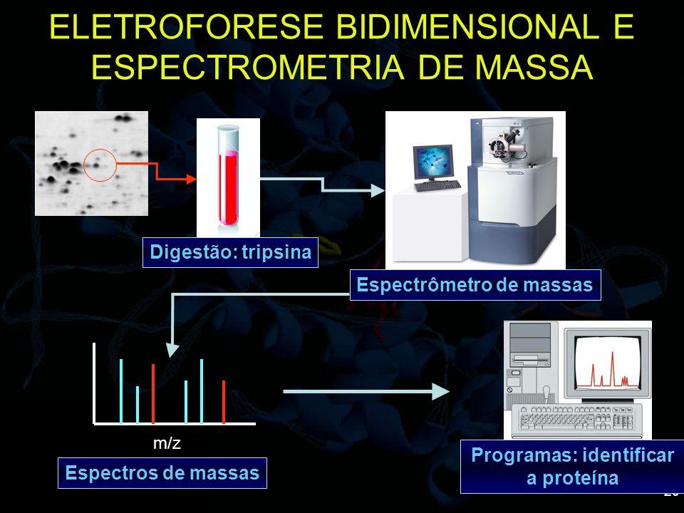 ELETROFORESE BIDIMENSIONAL E ESPECTROMETRIA DE MASSA